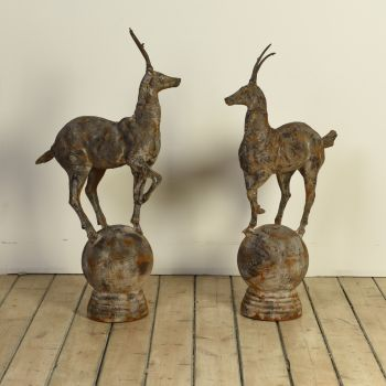 A pair of Stags
